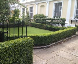GreenFX 1000 x 750 x 250mm Boxwood Hedge