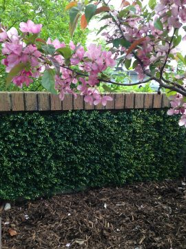 GreenFX 50cm x 50cm Boxwood (Buxus) Hedge Panel