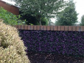 GreenFX 50cm x 50cm Lavender Boxwood Hedge Panel